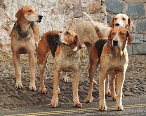 Quali sono i nomi collettivi di animali?