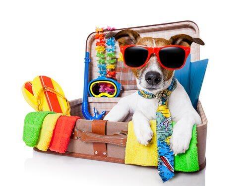 un cagnolino con gli occhiali in una valigia