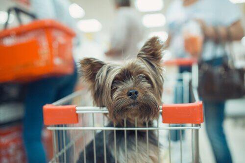 Si può fare shopping con il cane?