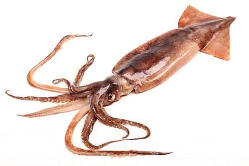 un calamaro disteso