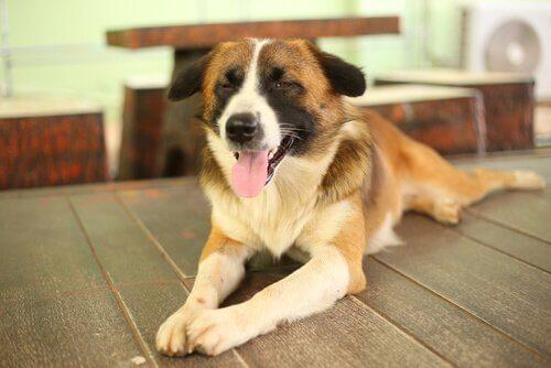 Come allenare i sensi dei cani ciechi