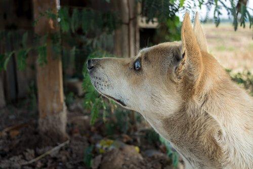 un cane cieco di profilo in un bosco