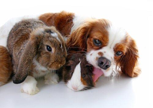 Cane e un coniglio insieme