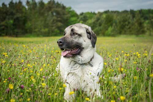 Cane su un prato fiorito