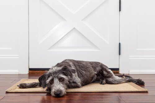 Cane riposa su uno zerbino davanti a una porta bianca