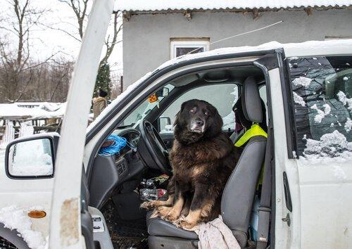 Che fare se il cane ha paura delle automobili?