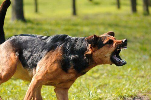 Cane rabbioso abbaia in un parco