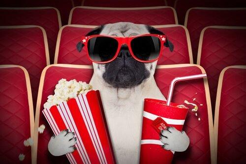 Ecco le sale cinematografiche per cani