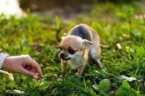 Come avvicinarsi a un cane che ha paura