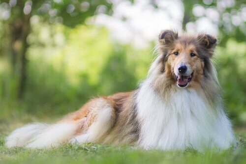 Tutto sull'alimentazione dei cani a pelo lungo