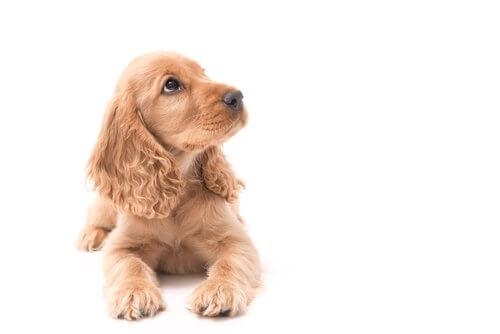 Educare il cane all'obbedienza sin da cucciolo