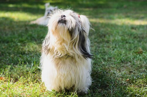 Cucciolo a pelo lungo in giardino