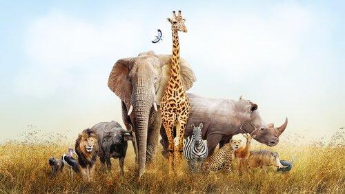 Gli animali che si possono vedere in Africa