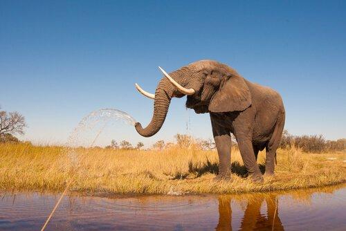 un elefante spruzza acqua dalla proboscide