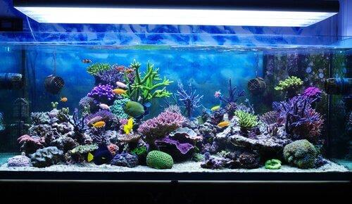 un enorme acquario domestico con pesci tropicali