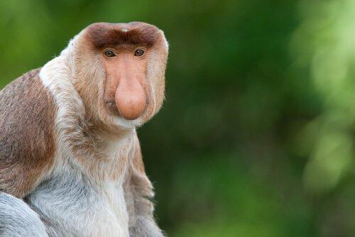 La specie di scimmie più curiose