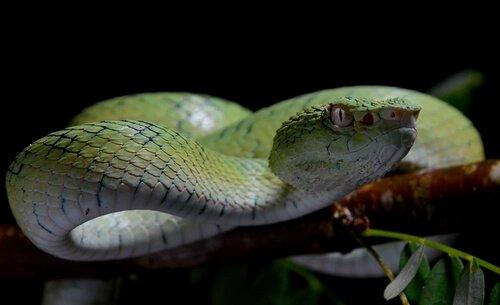 Serpenti più velenosi: sapete quali sono?