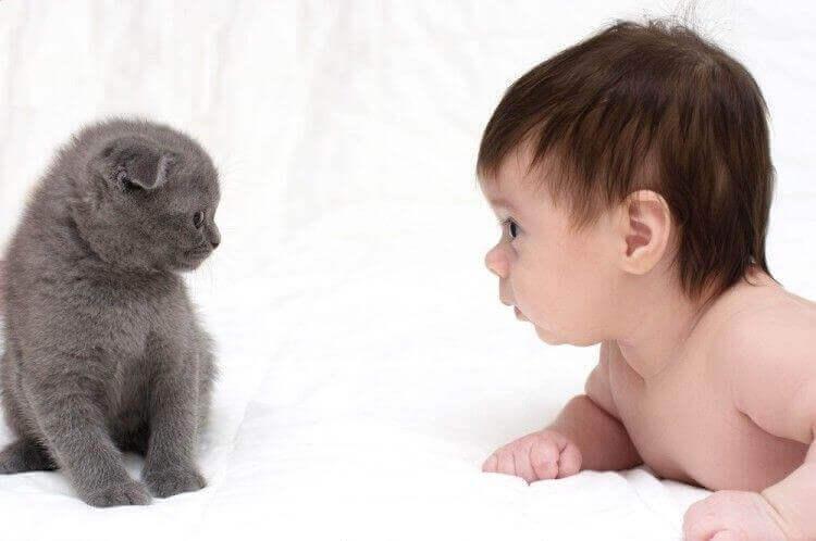 Gatti e bebè possono andare d'accordo?