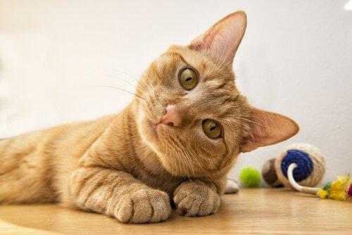 Sordità nei gatti: tutto ciò che bisogna sapere