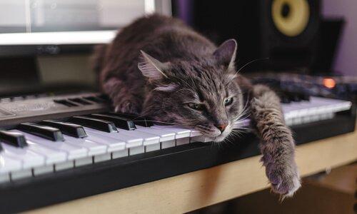 un gatto appoggiato su un pianoforte