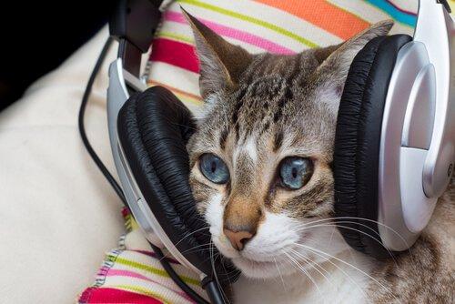 La musica fa bene ai gatti?