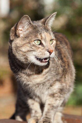un gatto di lato con gli occhi verdi