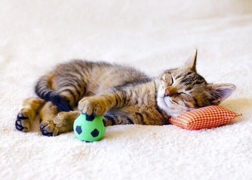 Quanti giorni può restare solo un gatto?