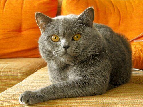 Correggere i cattivi comportamenti del gatto