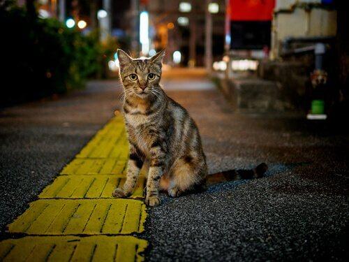 Gatto randagio in strada