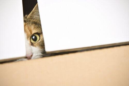 La curiosità uccise il gatto?