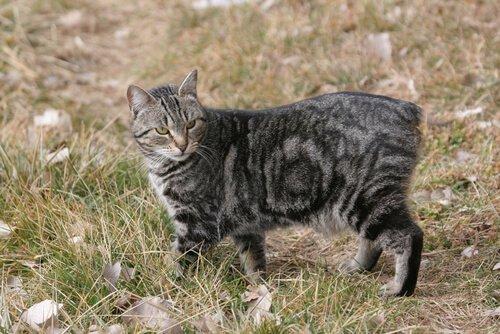 Gatto con spina bifida sull'erba