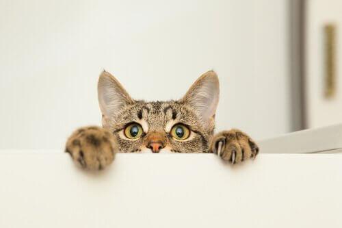 un gatto si affaccia sopra un mobile