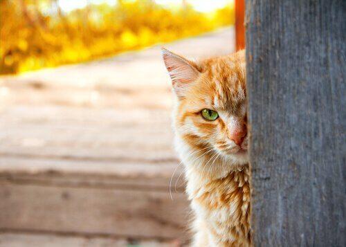un gatto si nasconde dietro un palo