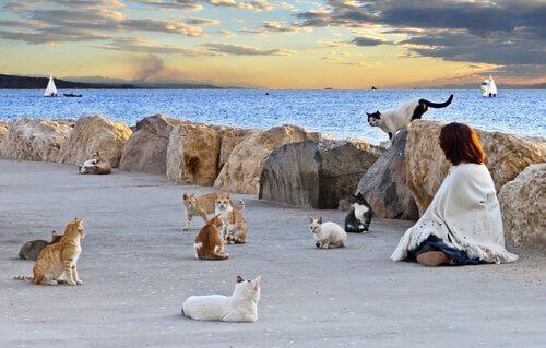 Perché bisogna controllare le colonie di gatti?
