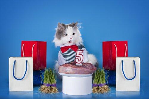 3 tipi di polpettone per gatti da preparare a casa