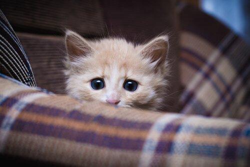 È necessario far socializzare i gatti?