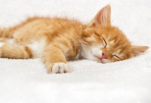Cosa fare se il gatto dorme troppo?