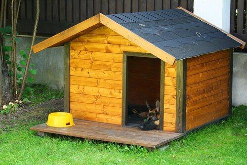 Gli animali domestici devono dormire dentro casa o fuori?