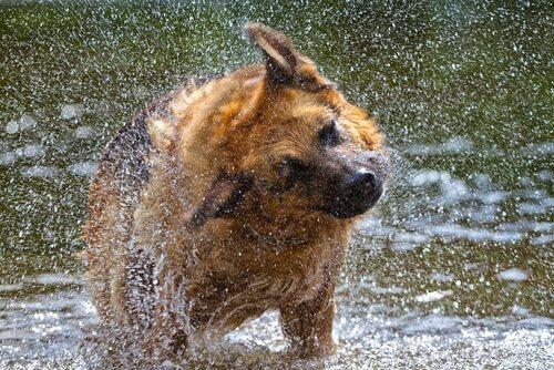 5 motivi perché un cane si scrolla