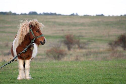Pony: origine, caratteristiche e curiosità