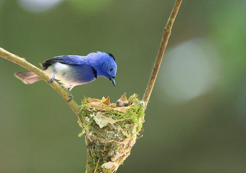 Gli uccelli, maestri nel costruire nidi