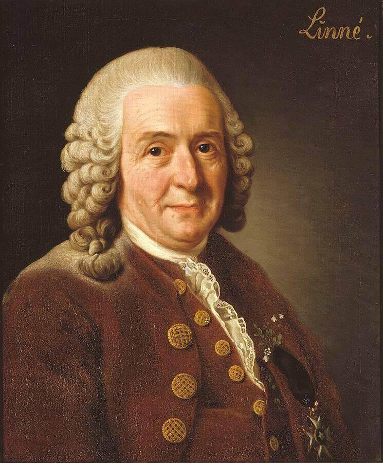 Carl Nilsson Linnaeus