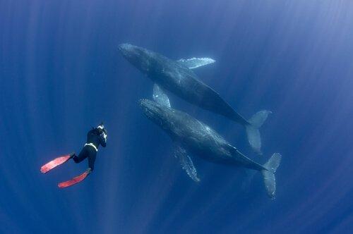 un sub fotografa due balene che nuotano assieme