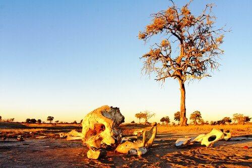 Foto di ipotetici cimiteri degli elefanti
