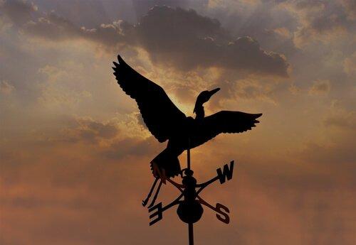 Uccelli indicatori: avete mai sentito parlare di loro?