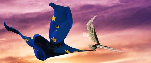 Uccelli nazionali europei: i migliori 5