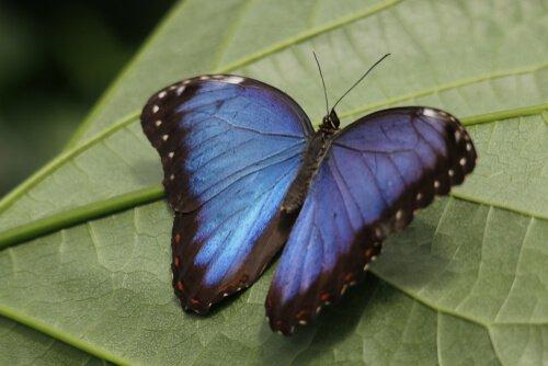 5 animali di colore blu: scopriteli con noi