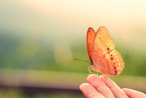una farfalla sulla mano di una persona