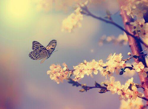 Come attirare le farfalle in giardino