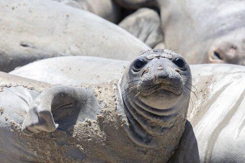 Com'è la vita delle foche? Scopriamo il loro comportamento